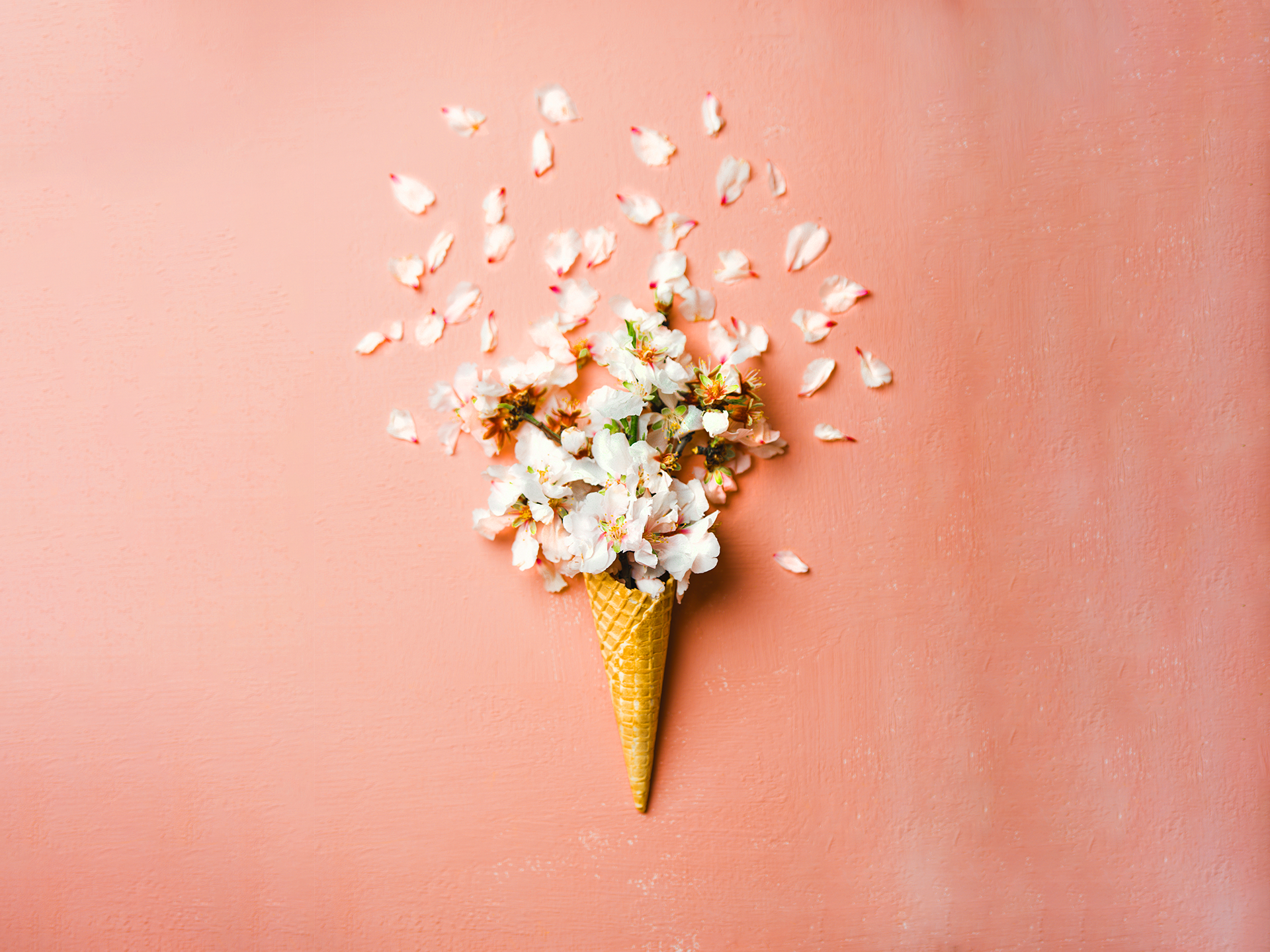 A peach background with white flowers in a scone.